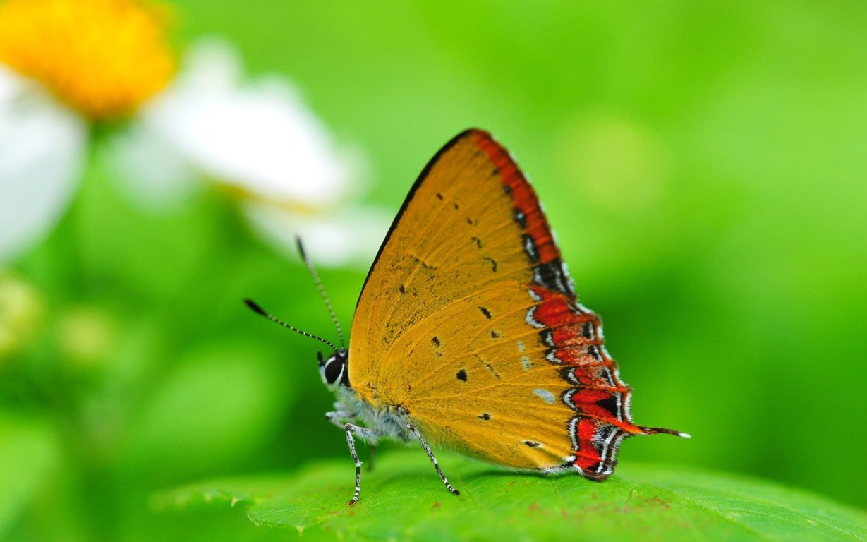 Butterfly Wallpaper 058