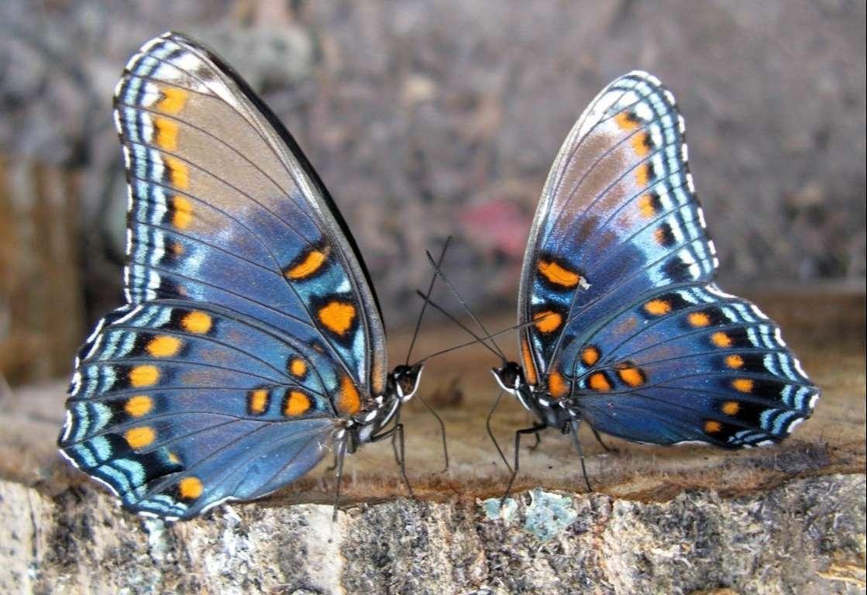 Butterfly Wallpaper 062