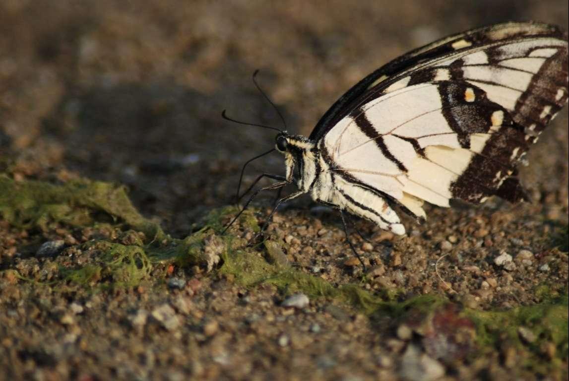 Butterfly Wallpaper 069