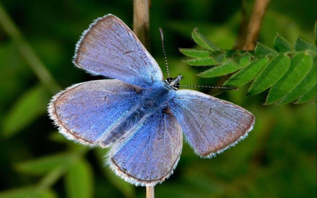 Butterfly Wallpaper 075