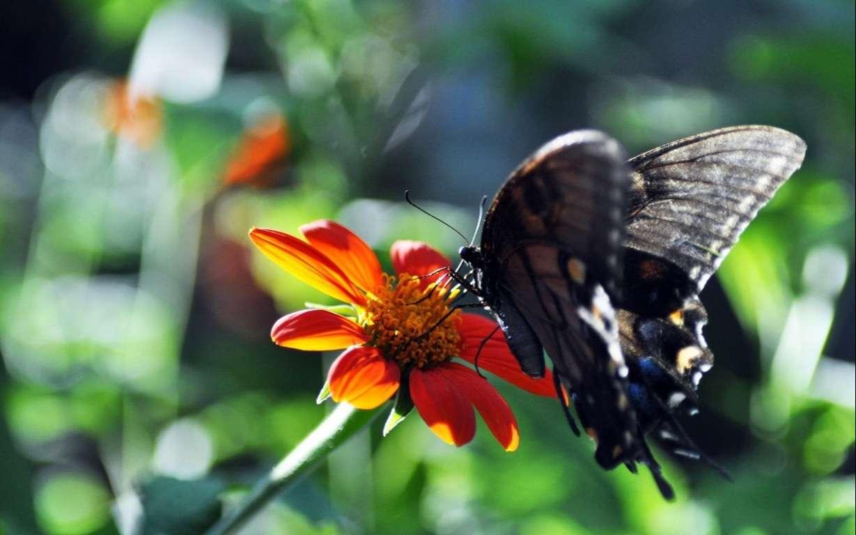 Butterfly Wallpaper 078