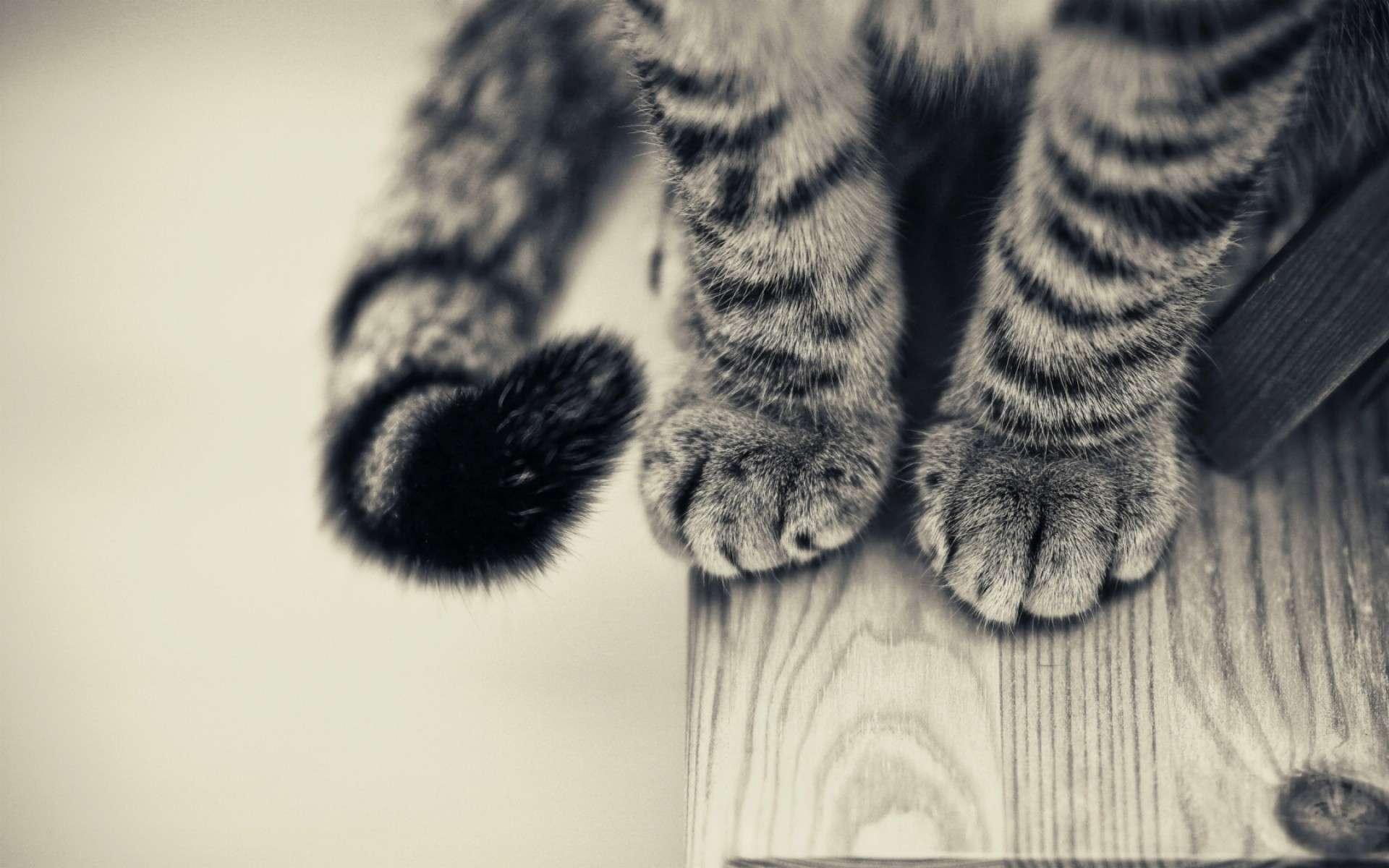 Cat Wallpaper 013