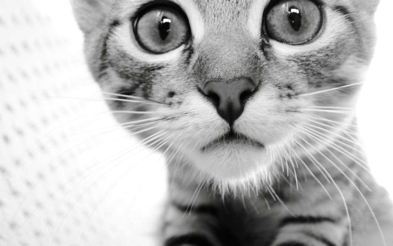 Cat Wallpaper 034