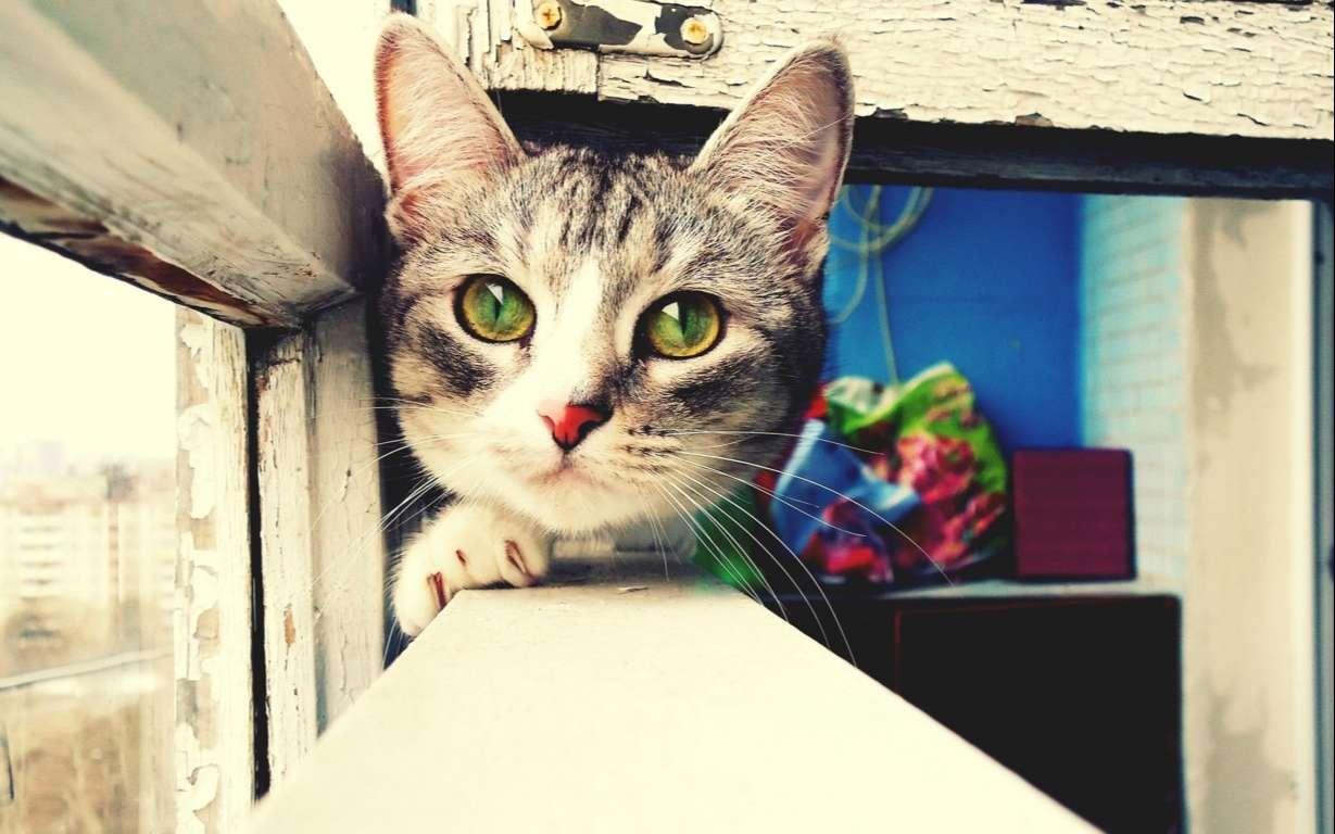 Cat Wallpaper 036