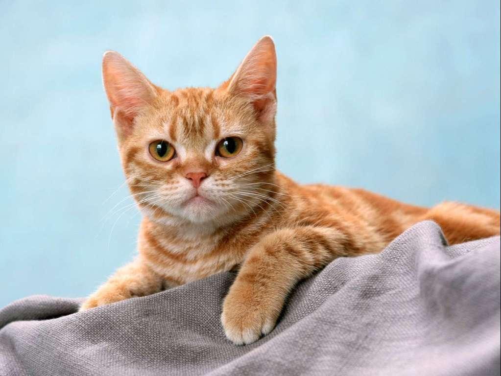 Cat Wallpaper 056