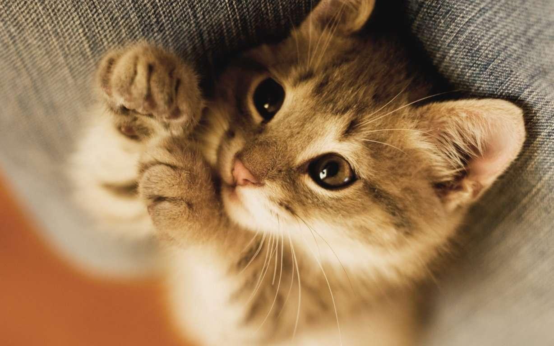 Cat Wallpaper 060