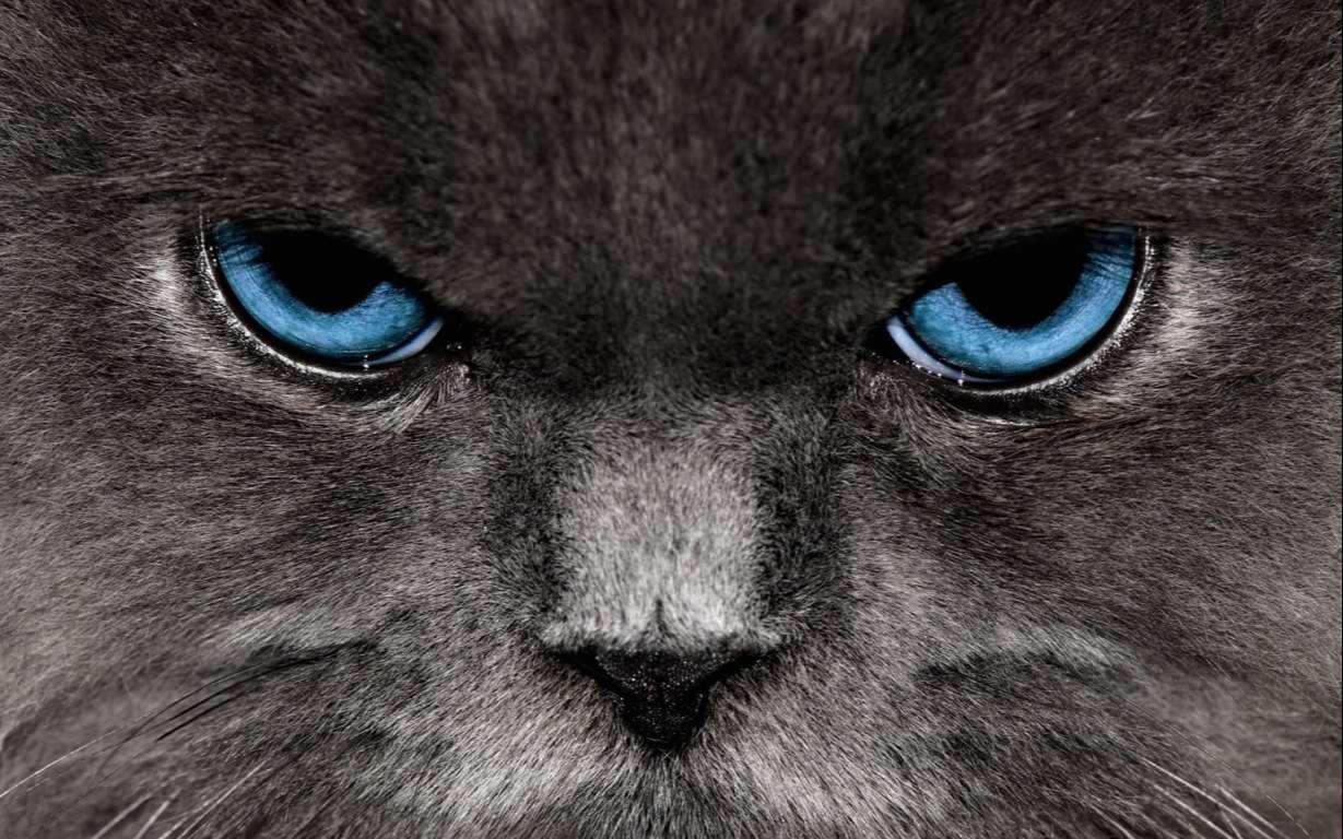 Cat Wallpaper 068