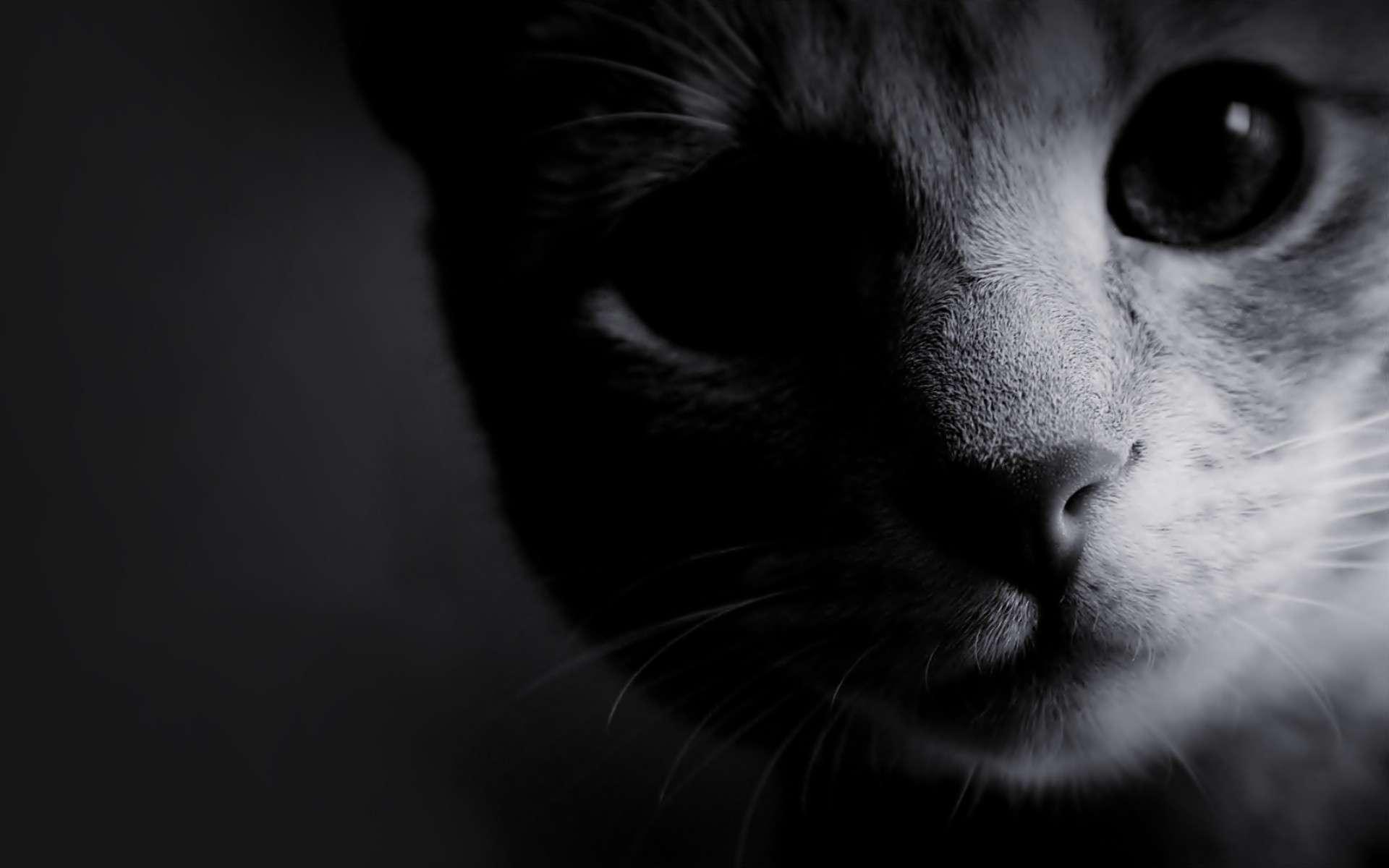 Cat Wallpaper 073