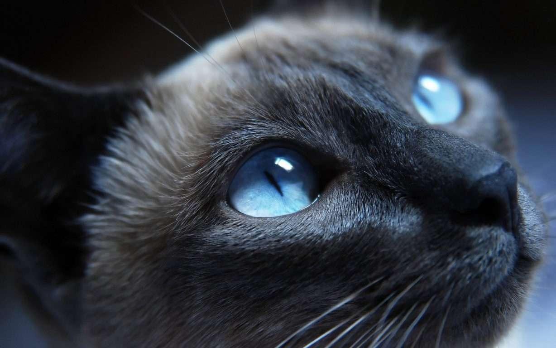 Cat Wallpaper 076