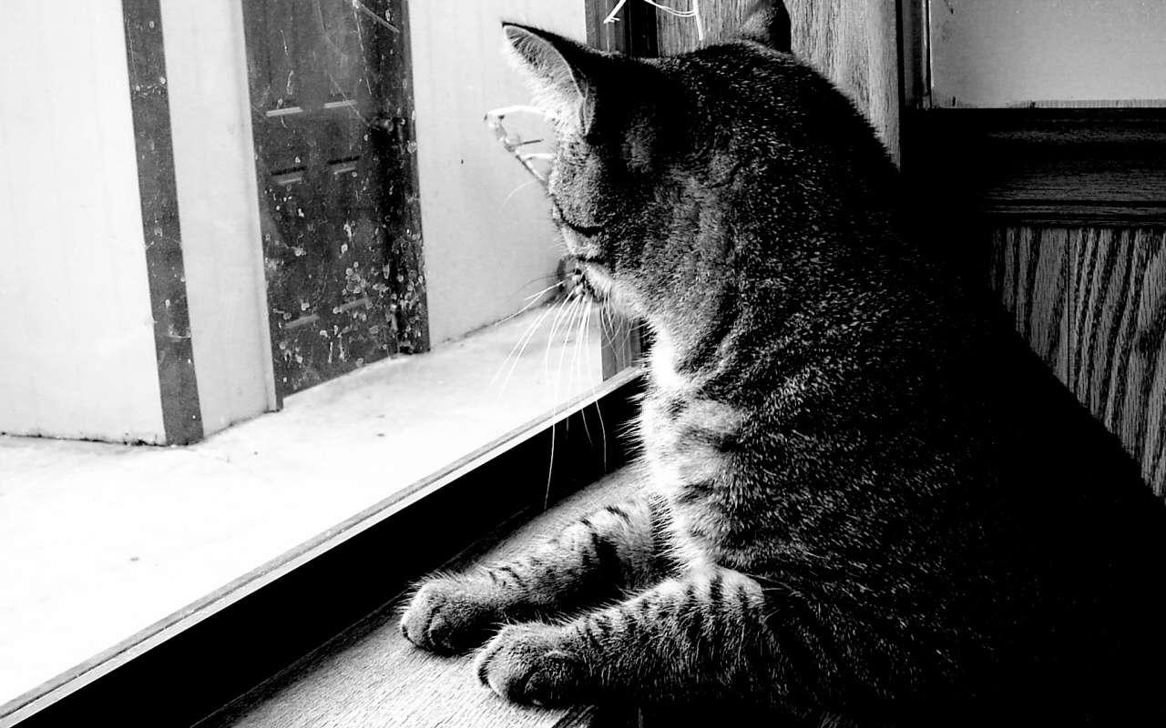 Cat Wallpaper 079