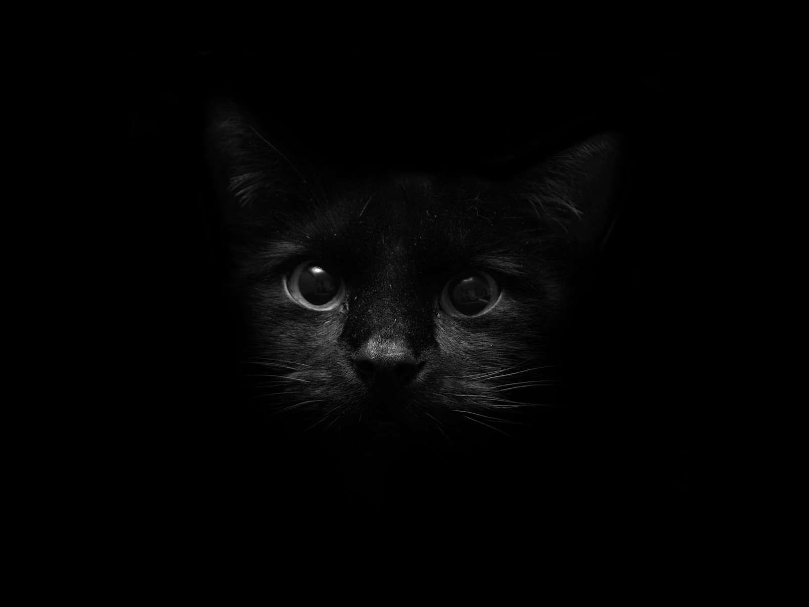Cat Wallpaper 080
