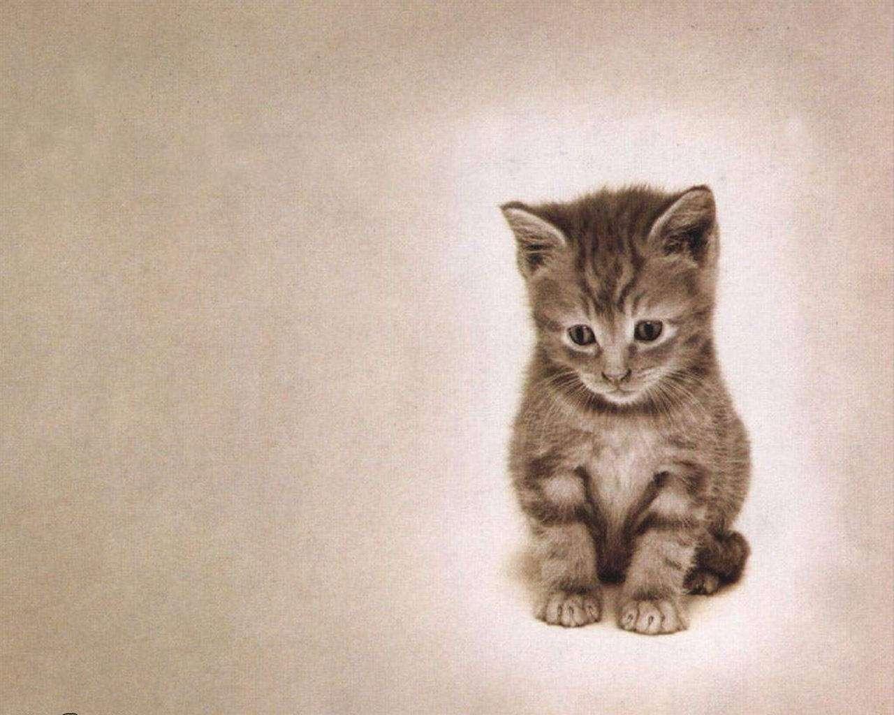 Cat Wallpaper 093