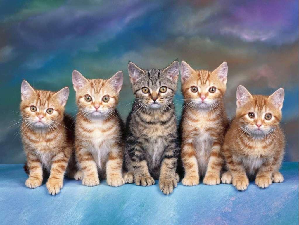 Cat Wallpaper 094