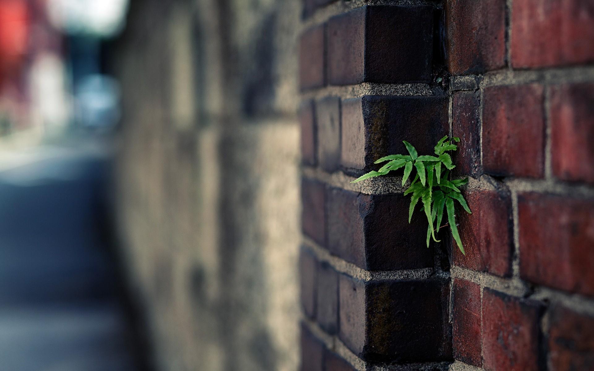 Brick Wallpaper 12
